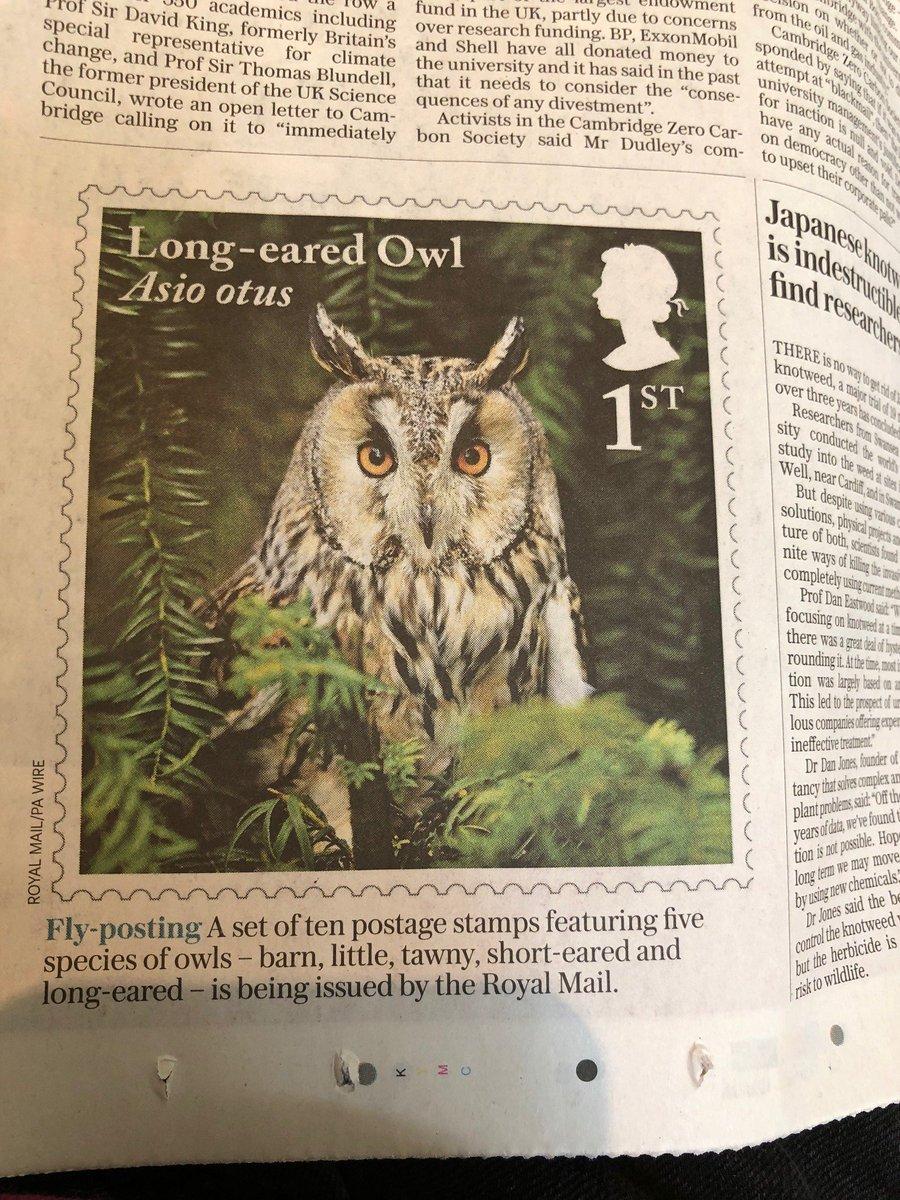minerva s owls of bath 2018 on twitter owl announcement owl