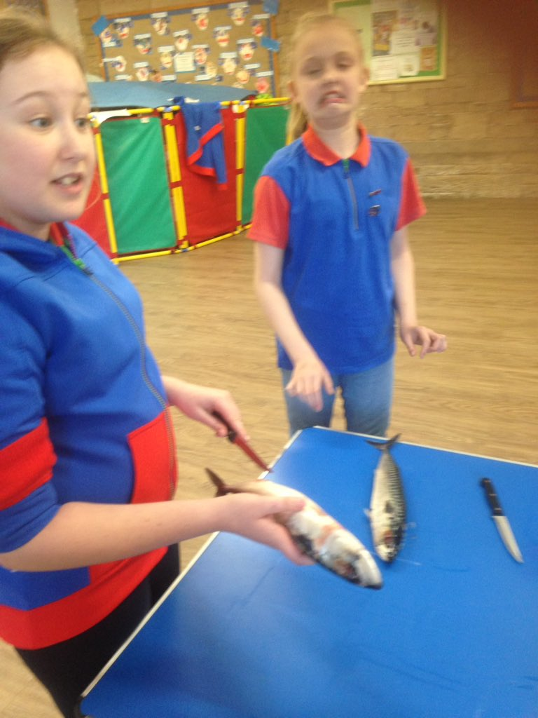 #guides we&#39;re learning traditional skills from this months @Girlguiding magazine - prepare a fish #notimpressed #fishy #facesaysitall @LancsNW #GuidingGallery<br>http://pic.twitter.com/yq3zwqtAZe