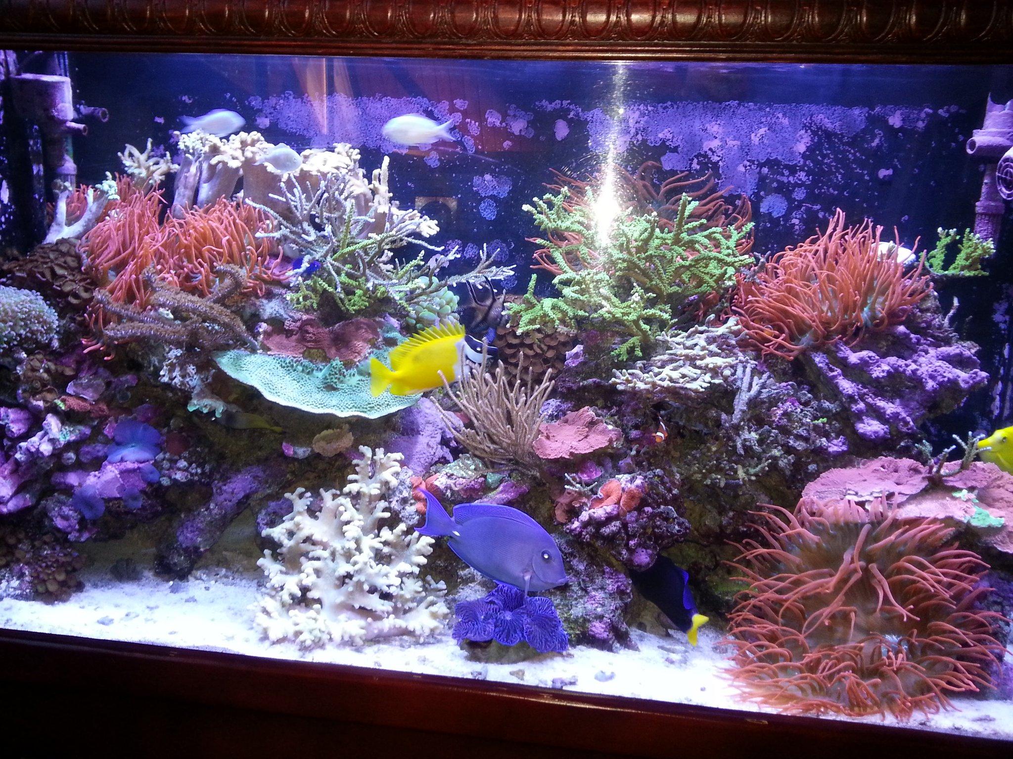 Hamilton Technology On Twitter This Reef Aquarium Uses