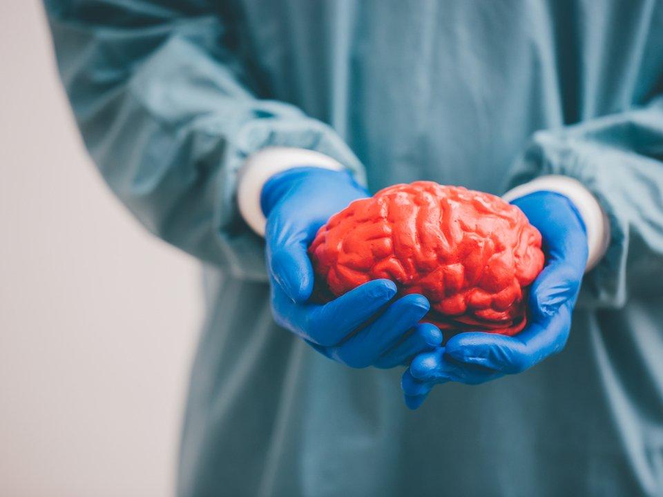 """イェール大学、身体から切り離された脳を36時間""""生かす""""ことに成功 #サイエンス #動物 https://t.co/yzmadZVcw9"""