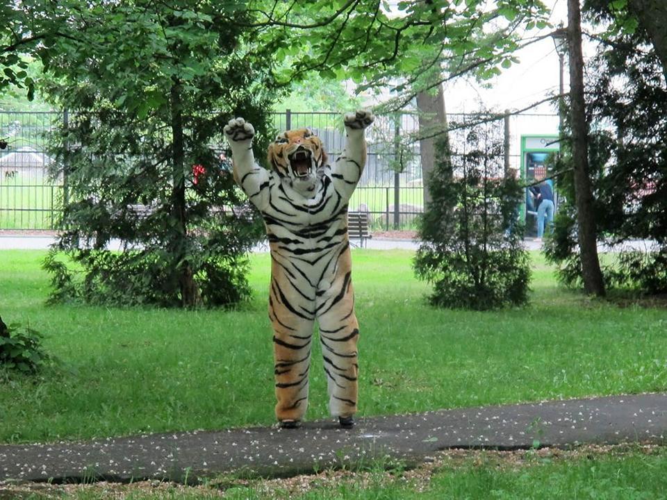 ロシアの動物園で行われた「逃げたトラを捕まえる訓練」の様子… ちなみに、動物園のスタッフは捕獲までに30分かかったとか
