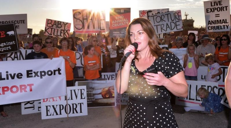 .@Greens senator @sarahinthesen8 has called on the federal government to prevent a live sheep transport ship from leaving Adelaide for the Middle East. Report in 7 News at 4pm and 6pm. https://t.co/2slnzVJl8x #auspol #LiveExport #7News