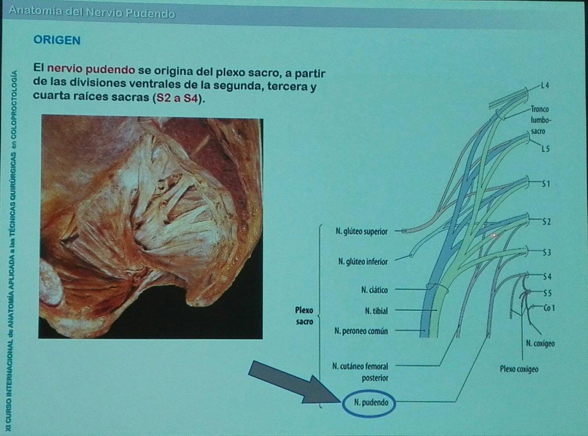 Atractivo Anatomía De Un Gecko Modelo - Imágenes de Anatomía Humana ...