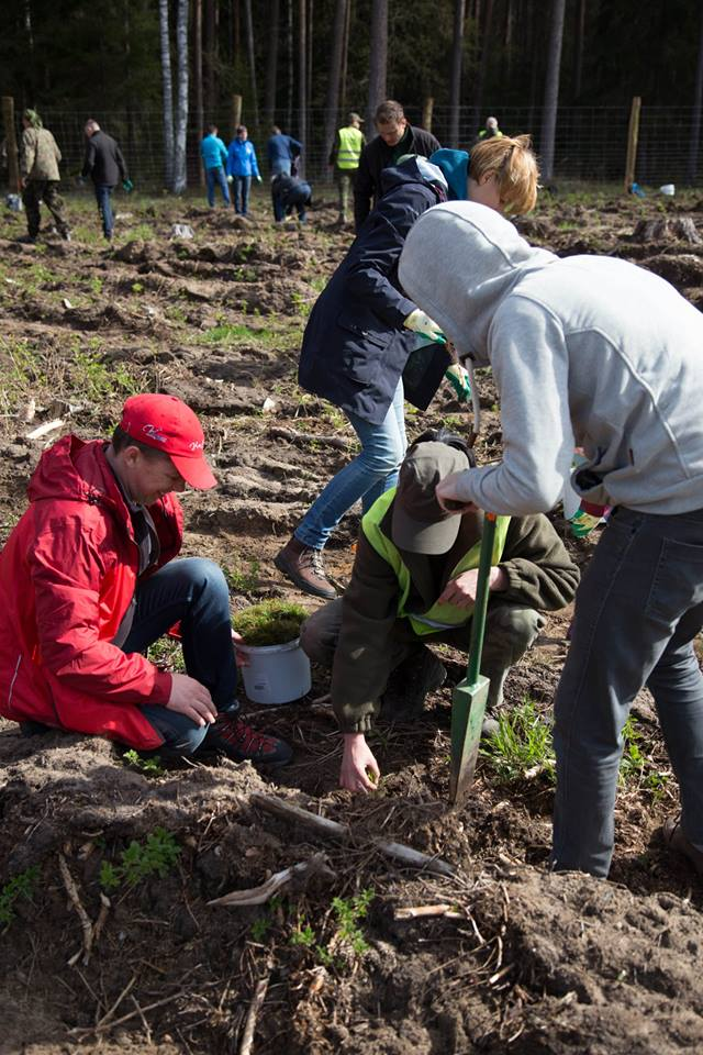 Vetta Windows on Twitter  Tree planting in northern Poland by the entire staff at CAL doors last week. For all of our clients who appreciate their ... & Vetta Windows on Twitter: