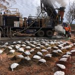 Fresh bagged drill samples collected from RC drilling underway at $LEX's Lucky Strike gold prospect near Kalgoorlie, drilling continues