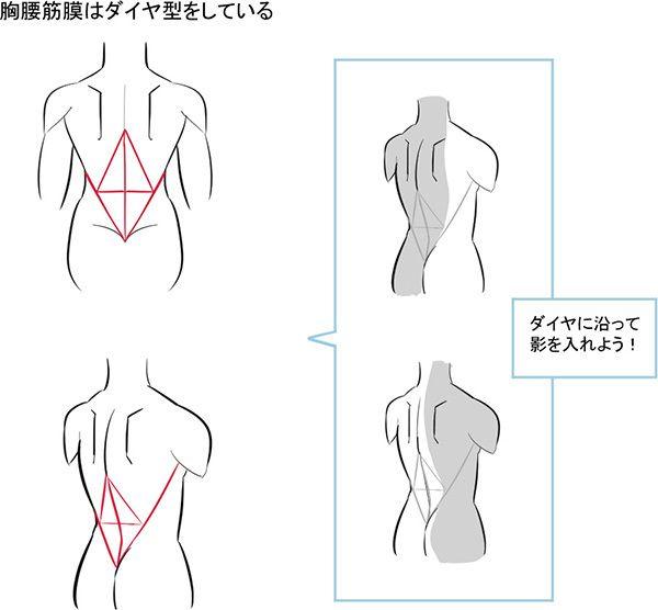 3つのパーツだけ覚えよう!シンプルに考える背中の描き方 | いちあっぷ
