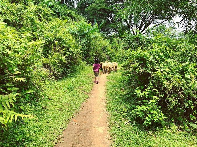 test Twitter Media - Wondering with the lambs in the wild!  #Aaniyah #lamb #kids #Tea #TeaEstate #Nature #Natural #playtime #babies #LalaKhal #Nazimgarh #Sylhet #instagram #travel #travelblogger #travelphotography #travelgram #Bangladesh #Asia #BeautifulBangladesh #Beautiful… https://t.co/ETVZTnSVuI https://t.co/00xvwjsgon