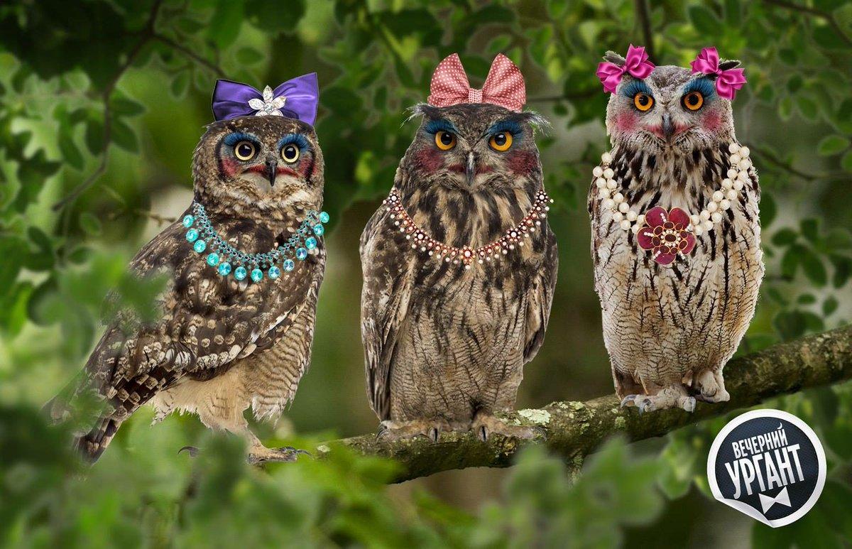 Три совы картинки