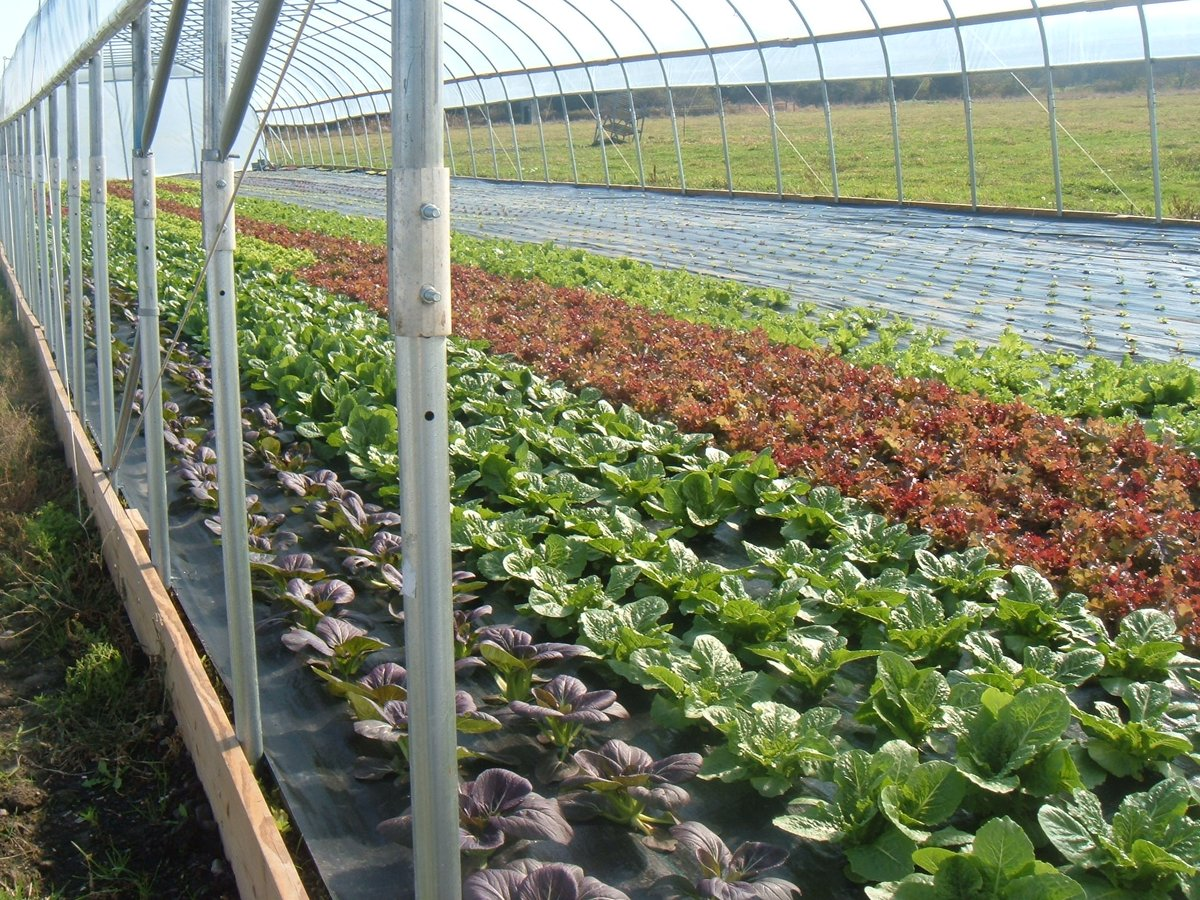 its spring in the greenhouse time to show off your crops we want to see your spring harvest send us a photo and let us know how your season is - Rimol Greenhouse Of Photos
