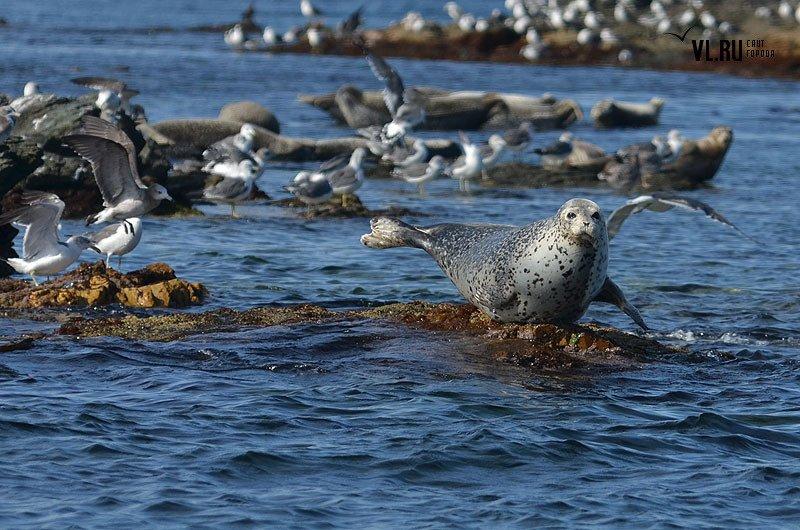 фото морских животных прим края