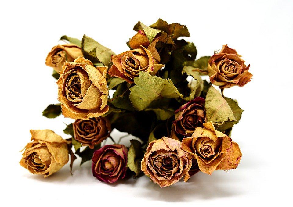расположенные засушенные розы в картинках процессе эксплуатации