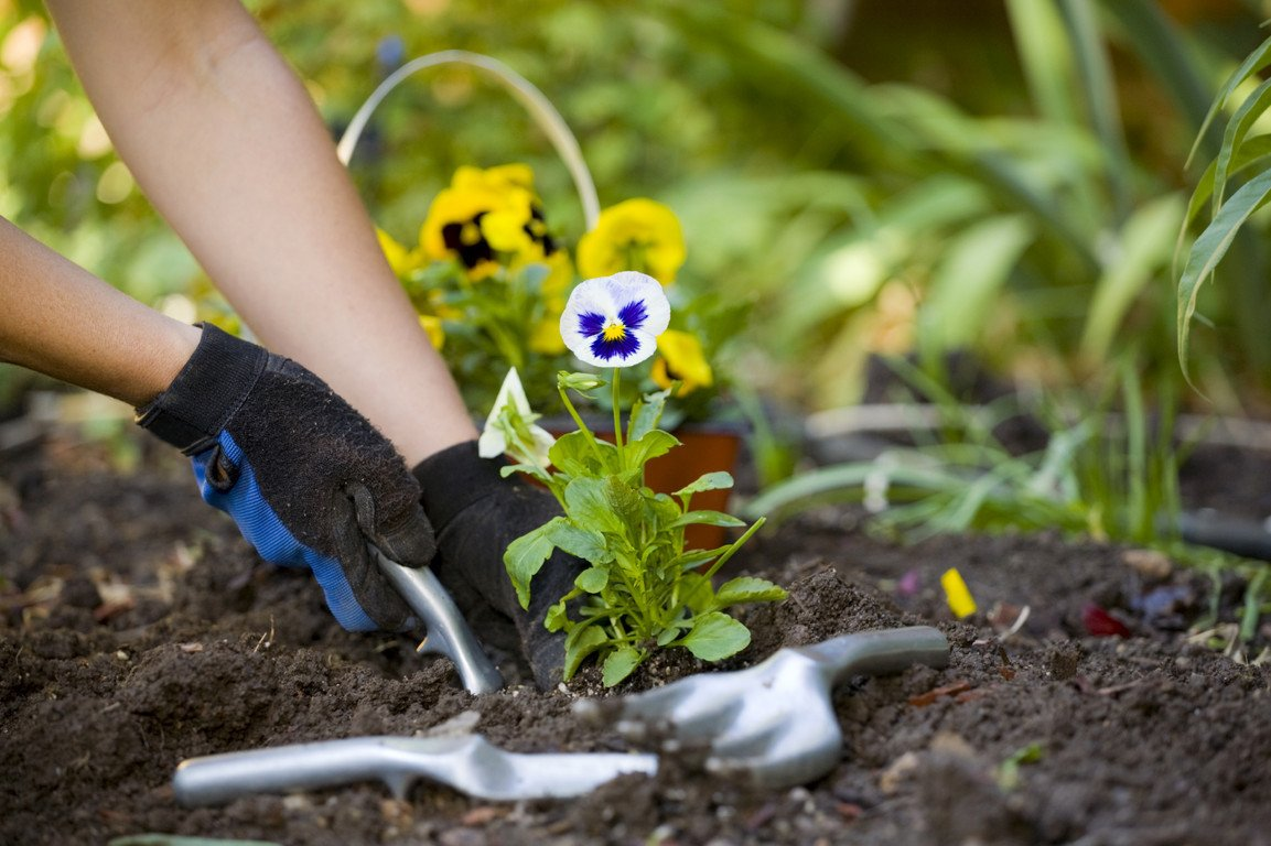 Картинки для детей работа в огороде весной высадка рассады, днем рождения анимационные