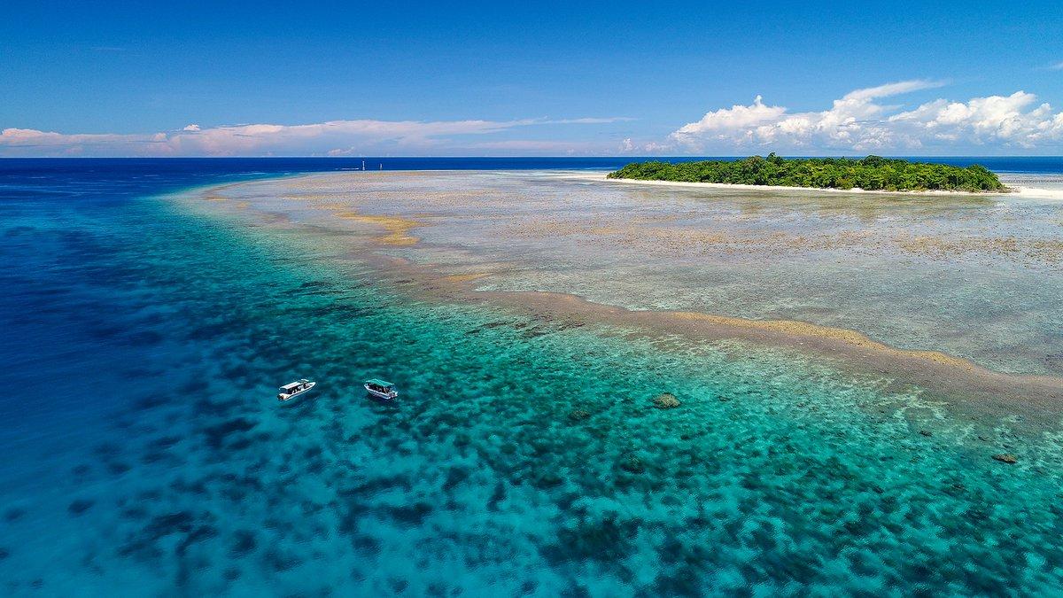 Es Gibt Sie Vor Allem Im Roten Meer, In Südostasien Und Der Karibik.  (Fotos: S. Pierce, F. Dudenhofer)pic.twitter.com/TX1BS4ymoe