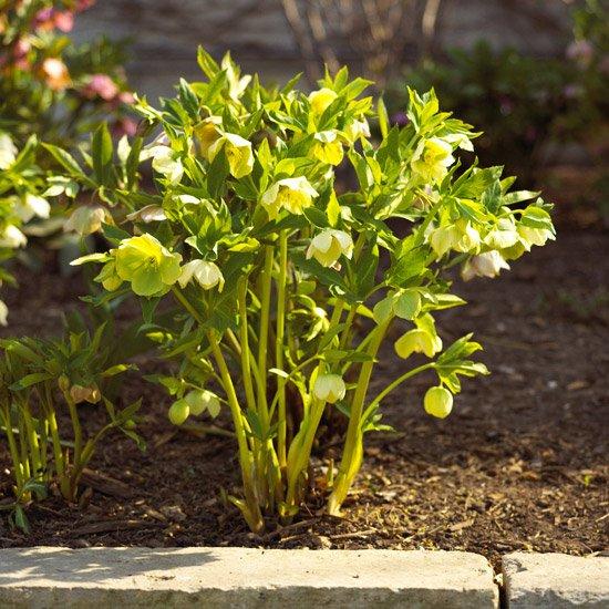 Betterhomesgardens on twitter perennial flowers that bloom all 730 pm 11 may 2018 mightylinksfo