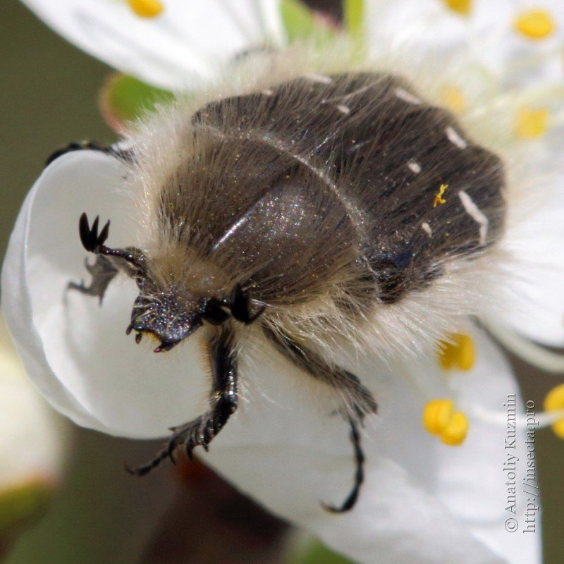 майские жуки в пуховиках картинки мастер-классы английскому