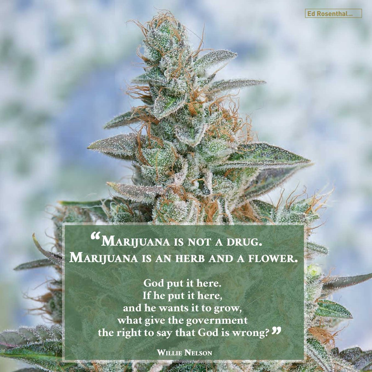 Happy 85th birthday @WillieNelson  #Legend #LegalizationActivist #SocialWarrior #ganja #cannabis #marijuana #RollMeUpAndSmokeMeWhenIDie