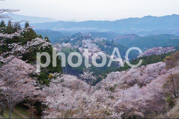 吉野山の桜→ 詳細→  #写真撮ってる人と繋がりたい  #カメラ男子 #奈良 #吉野 #photography