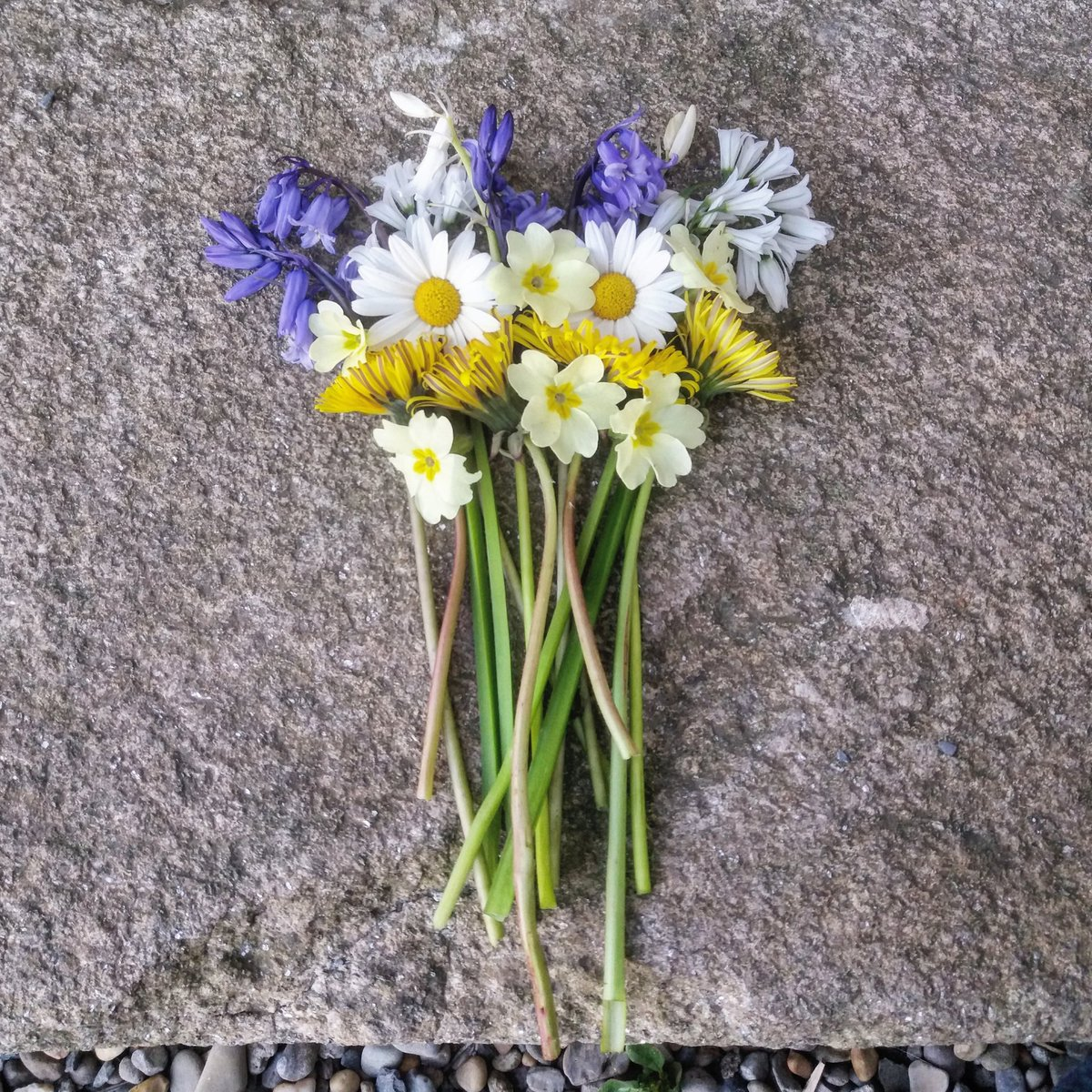 Irish Archaeology On Twitter Just Left Our May Flowers On The