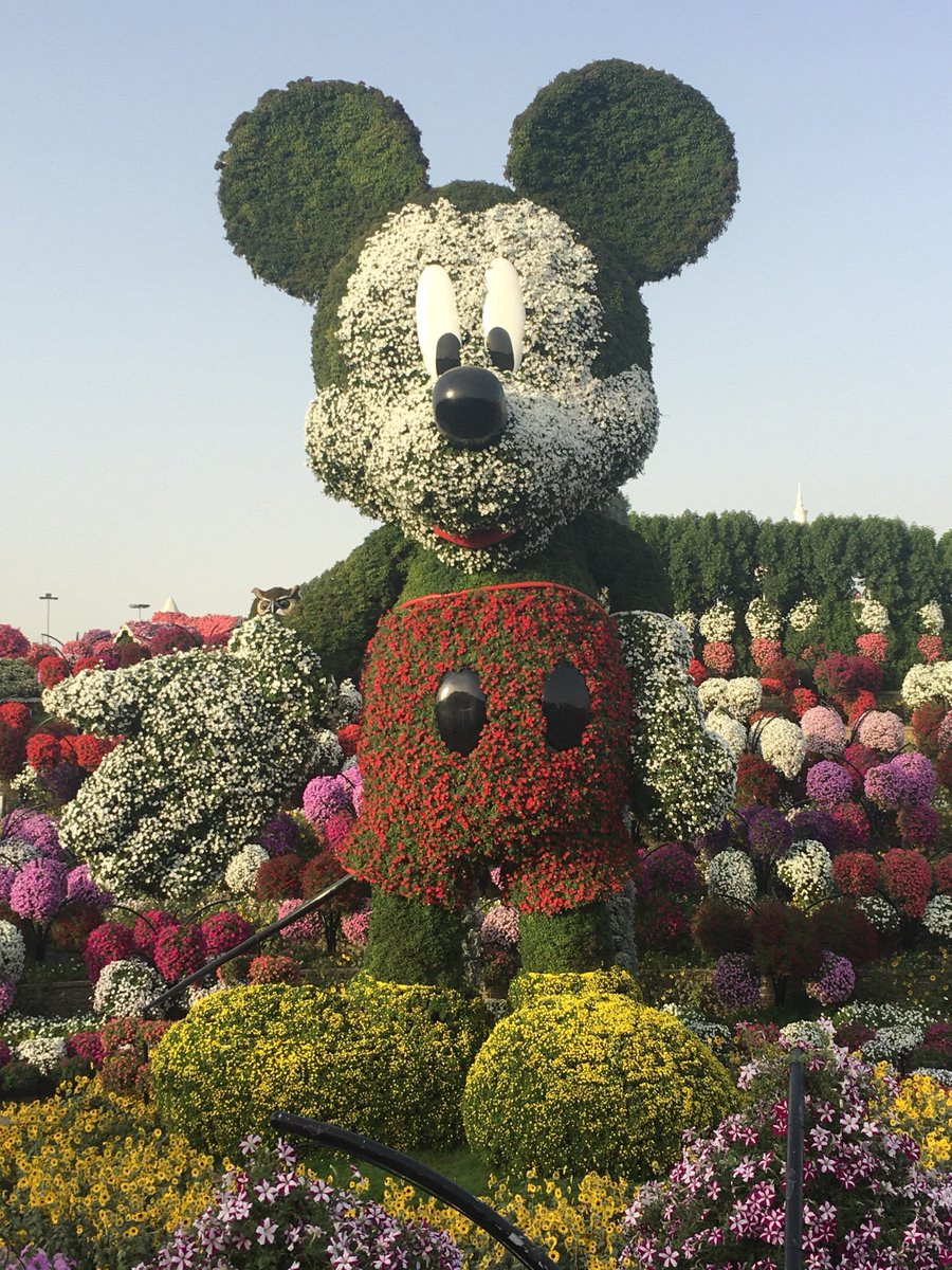Biggestlongestcraziest On Twitter The Worlds Tallest Supported Topiary Structure Disney S Mickey Mouse Made Up Of A Beautiful Assortment Of Flowers Dubaimiraclegarden Https T Co Tbolyovklc