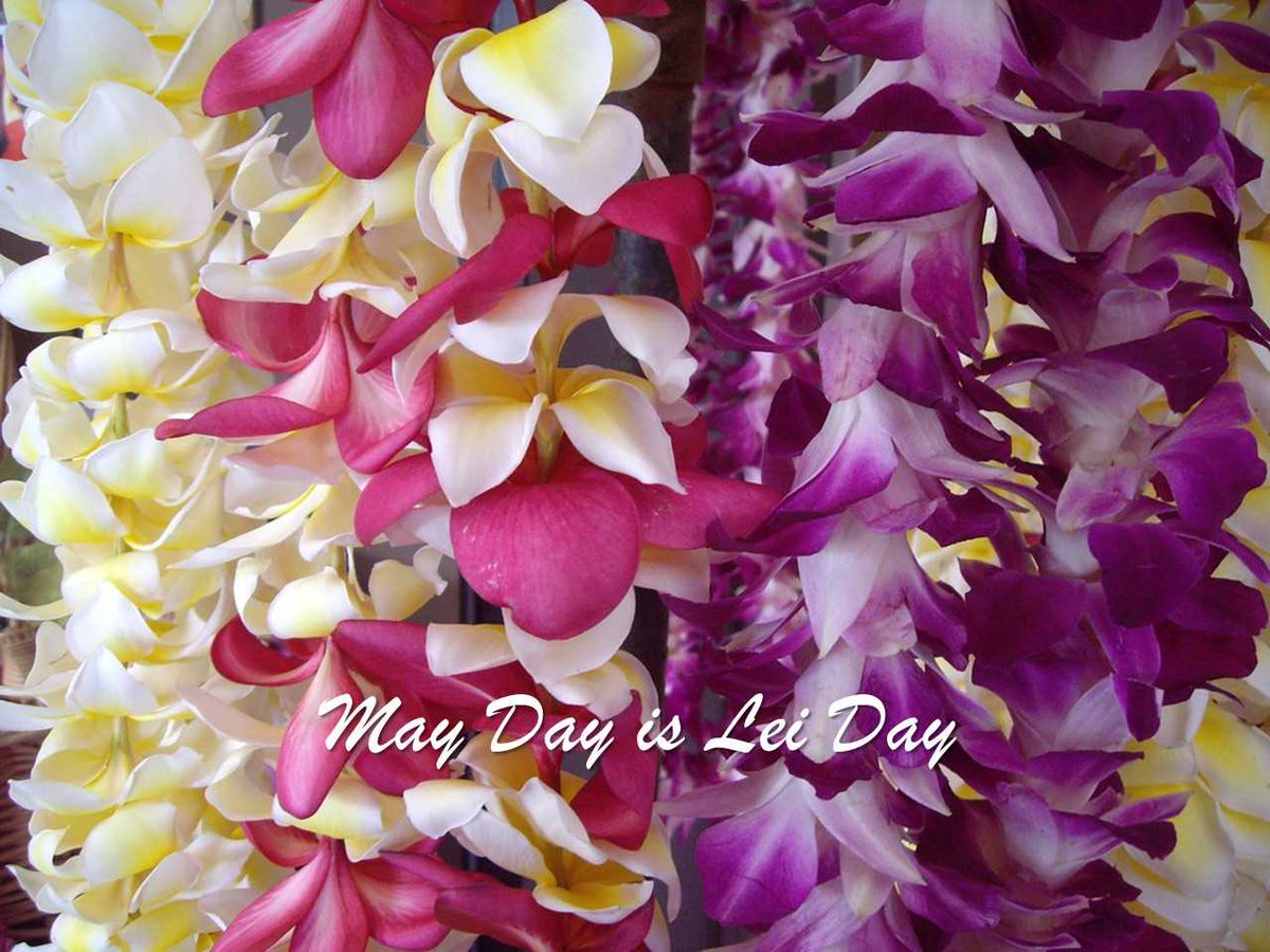 Hccnc on twitter may day is lei day in hawaii garlands of flowers hccnc on twitter may day is lei day in hawaii garlands of flowers everywhere all of the colors in the rainbow maidens with blossoms in their hair izmirmasajfo