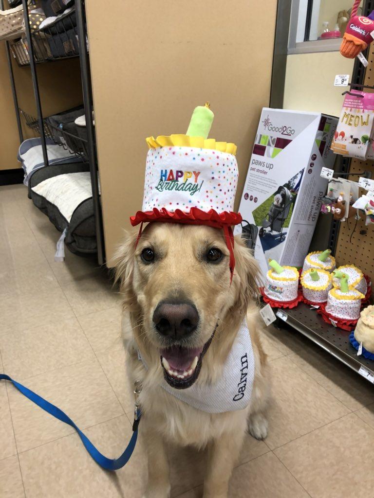 Petco On Twitter Happy Birthday Cutie Calvin