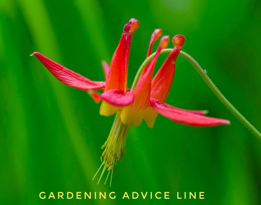Milner Gardens (@milnergardens) | Twitter