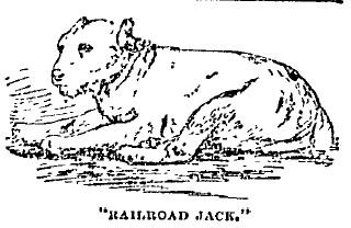 railroad jack on twitter it s purebreddogday some people tried