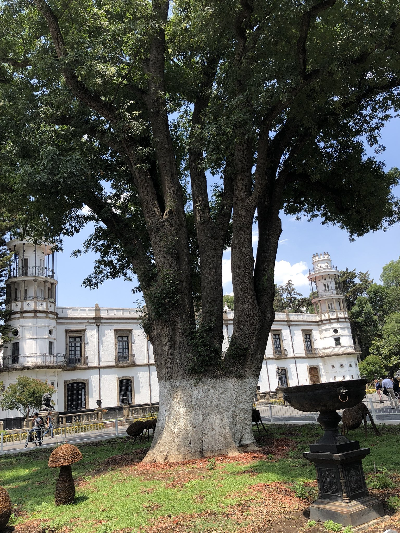 Árbol de los Acuerdos en el Estado de México.
