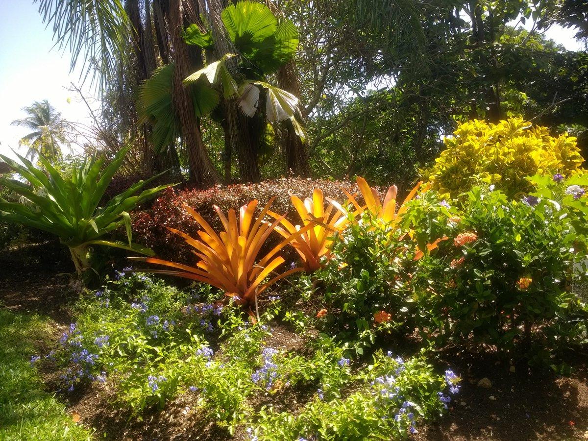 Andromeda Gardens - @GardenAndromeda Twitter Profile   Twipu