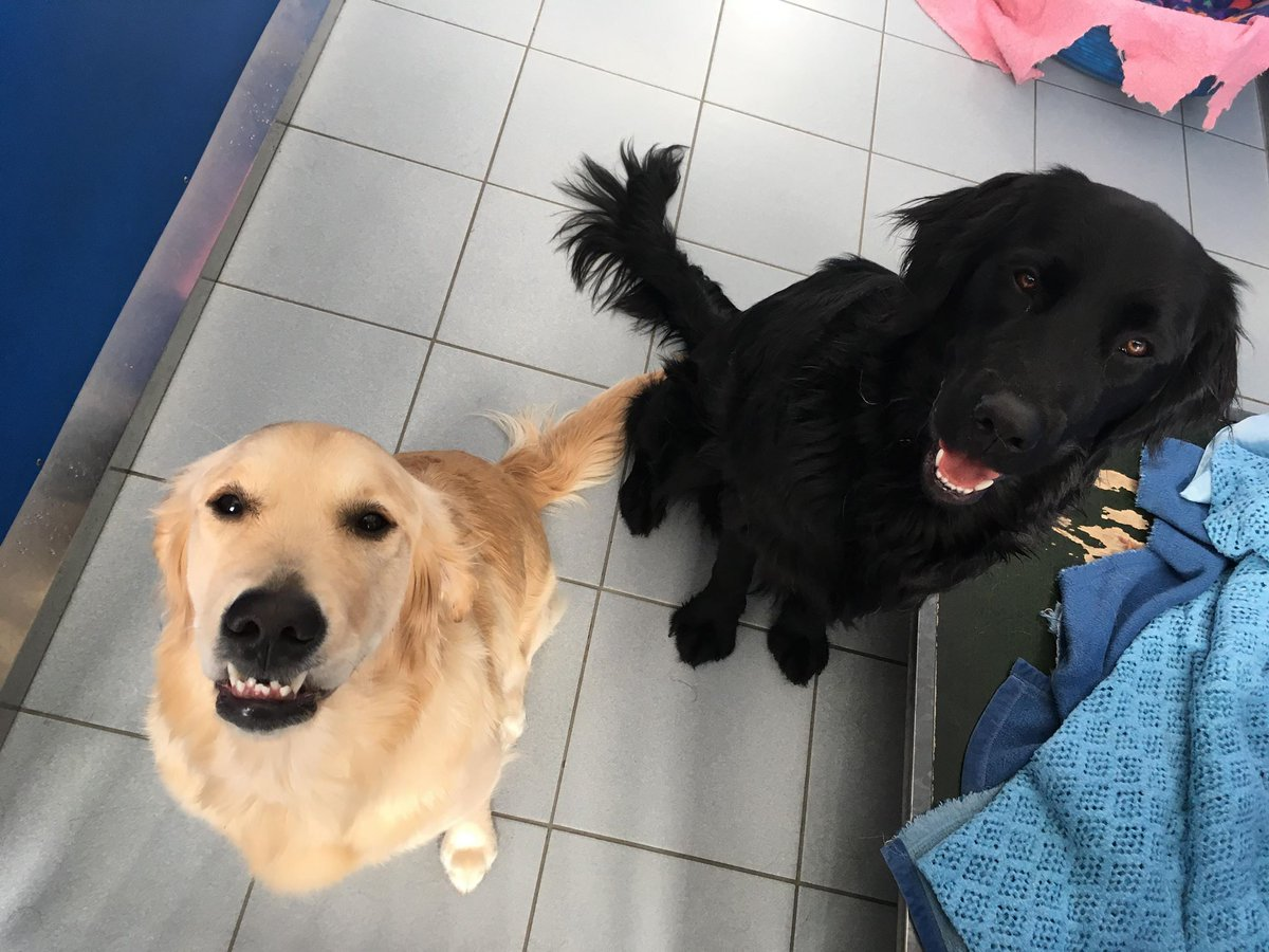 Guide Dogs Scotland On Twitter We Just Love Lily S Face In This