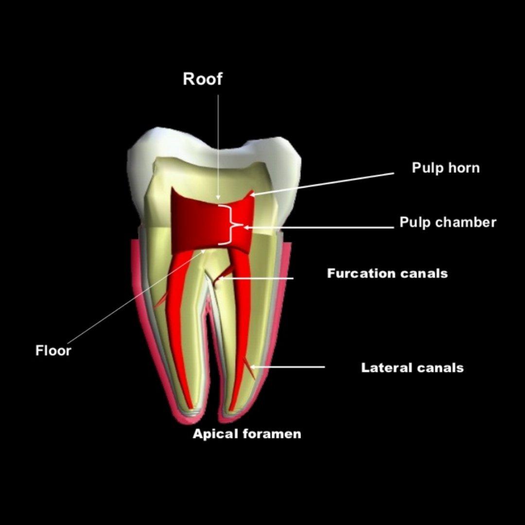 Dental Buzz (@Dental_Buzz) | Twitter