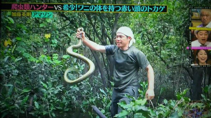 加藤 爬虫類