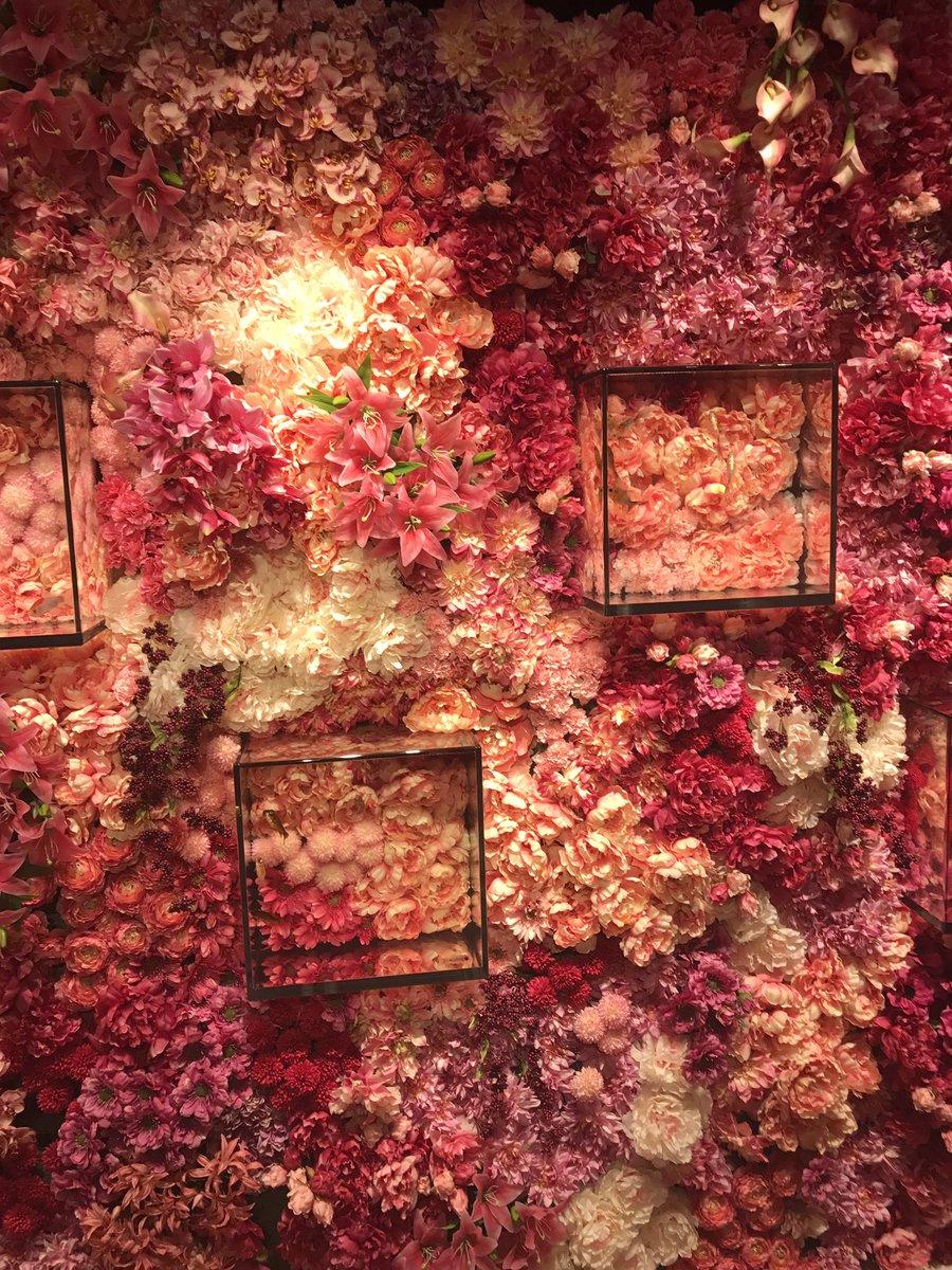 GWの穴場スポット!?奈良に新しくできた金魚ミュージアムがマジでガラガラらしい!