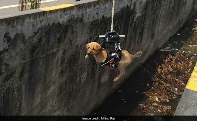 Lucknow man saw puppy trapped in drain. He built a drone to save it