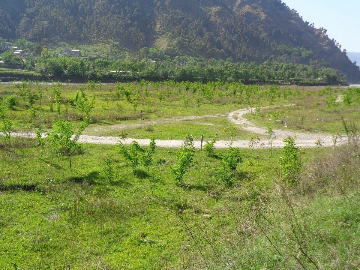 Billion Tree Tsunami Abbottabad.