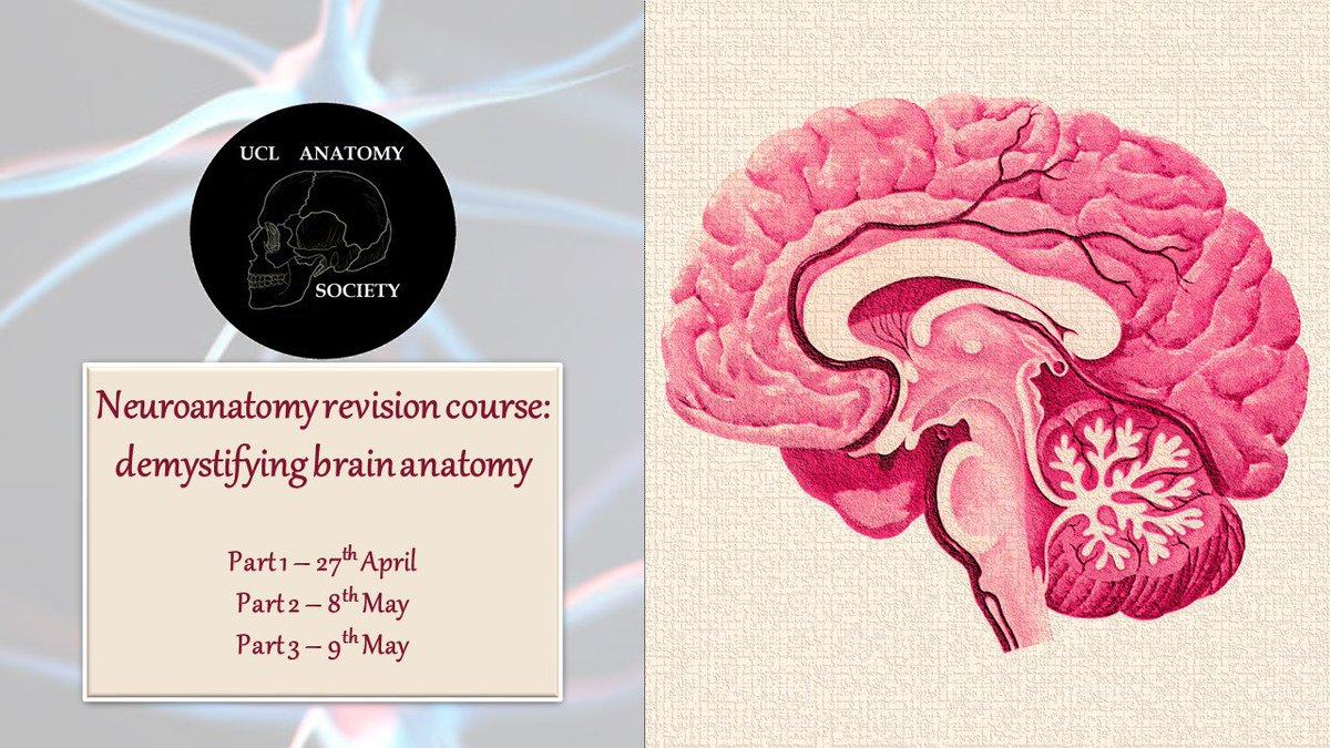 UCL Anatomy Society (@UCLanatomysoc) | Twitter