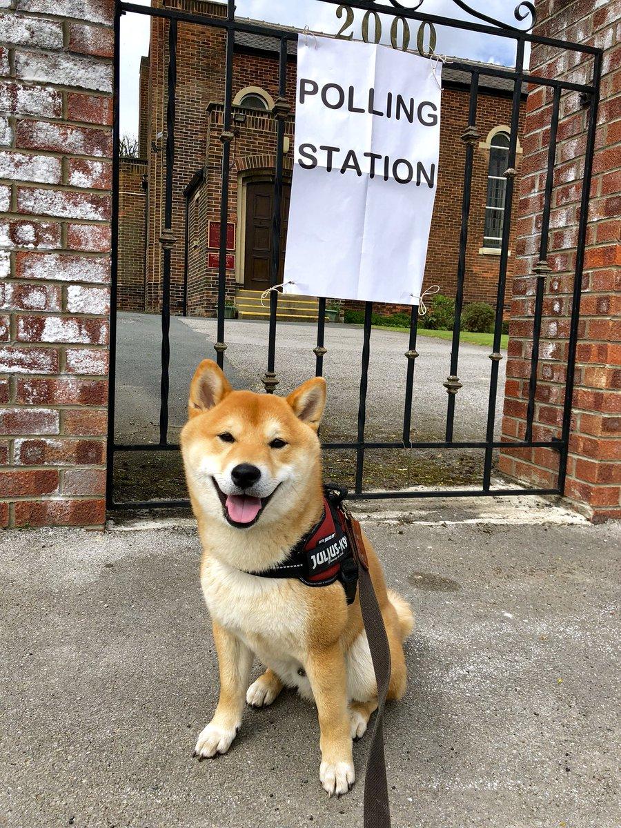 Картинки по запросу #dogsatpollingstation
