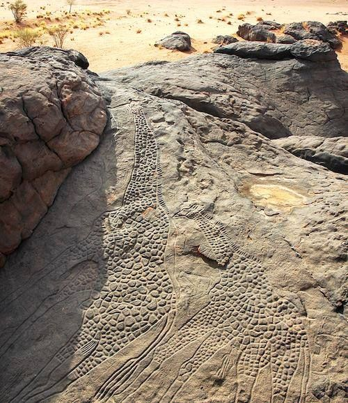 the worlds largest rock art petroglyph dabous giraffe - 500×578