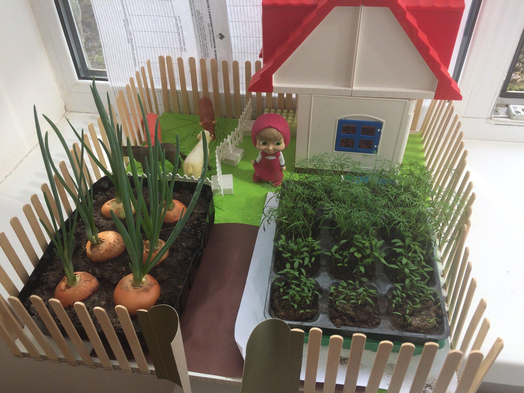 картинка к проекту огород на окне предоставляет полное