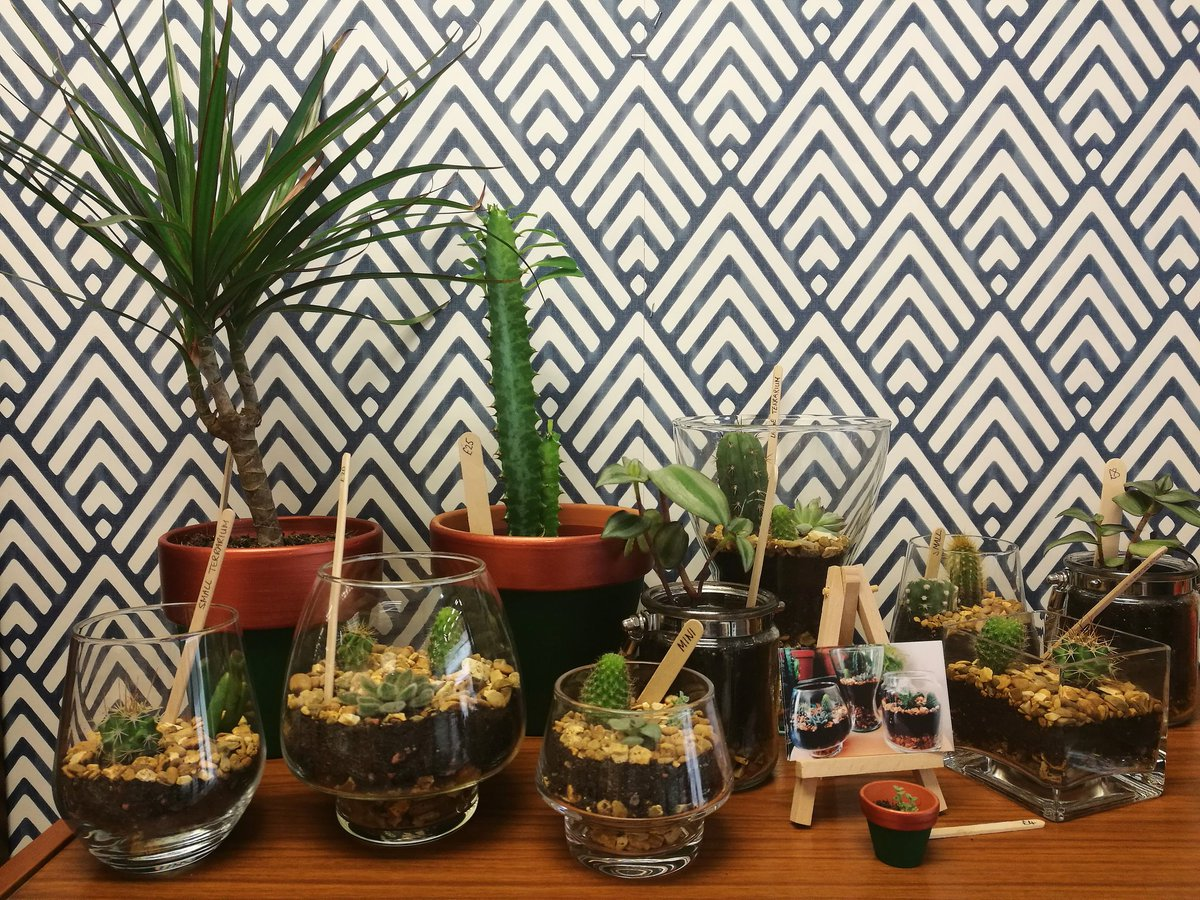 Sap Plants On Twitter You Can Buy My Open Terrariums Plants And