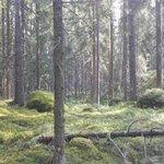 Oletko jo löytänyt Kintulammin, retkeily- ja luonnonsuojelualueen Teisko-Aitolahdessa 20 km #Tampere'en keskustasta? Huomenna 5.5. alueen vihkiäiset, tervetuloa! Kyse luonnonsuojelualueesta, jonka lahjoitimme viime vuonna #Suomi100-lahjana. https://t.co/Elagcnphag #luonnonsuojelu