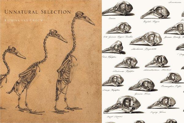 book Функциональная анатомия