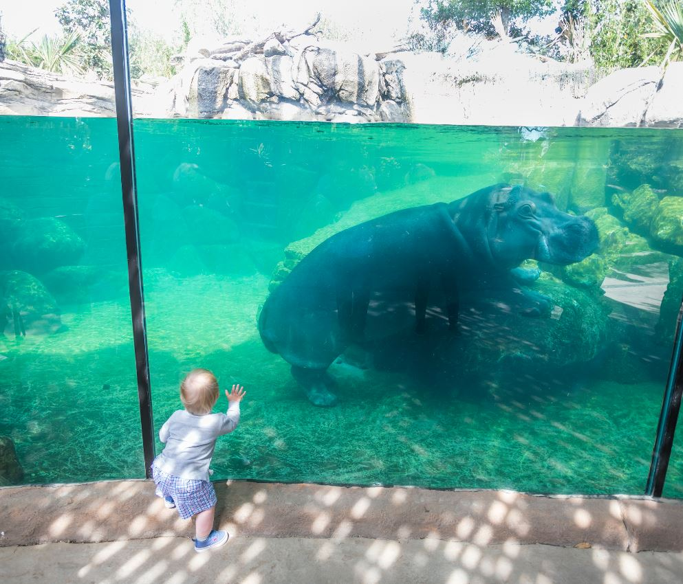 Fort Worth Zoo on Twitter: