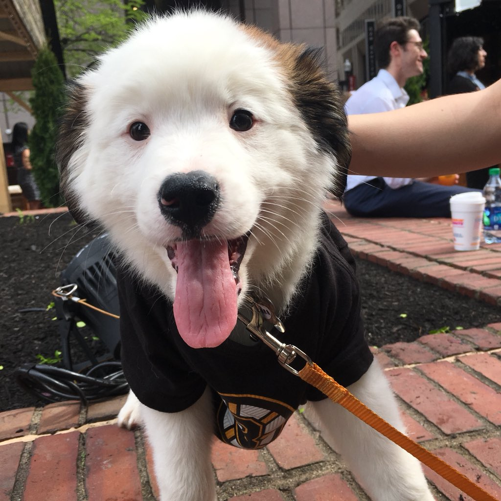 Cuteness Overload W/ These Adoptable Dogs At The Opening Of The Patios At  Boston City Hall: Http://cityhallplazaboston.com Pic.twitter.com/NrF1hSMgPM