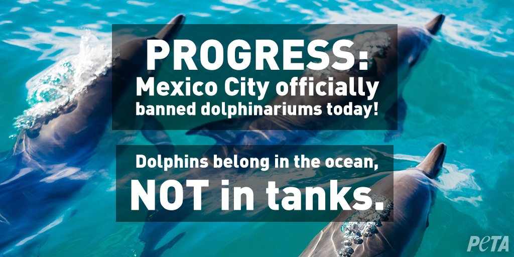 @kathykaehler BREAKING: #MexicoCity officially banned dolphinariums today 💙🐬 RT if you want ALL cities to ban them!
