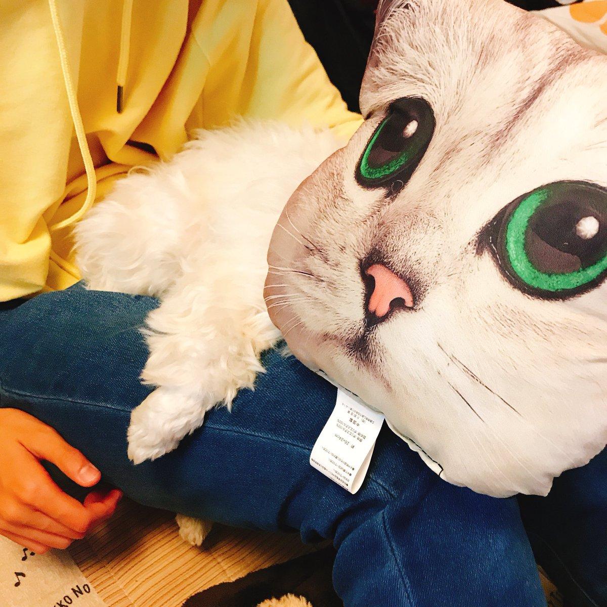 test ツイッターメディア - ヌコ化現象 #猫化 #ダイソー #猫グッツ #ヌコ https://t.co/O85pzC2T3h