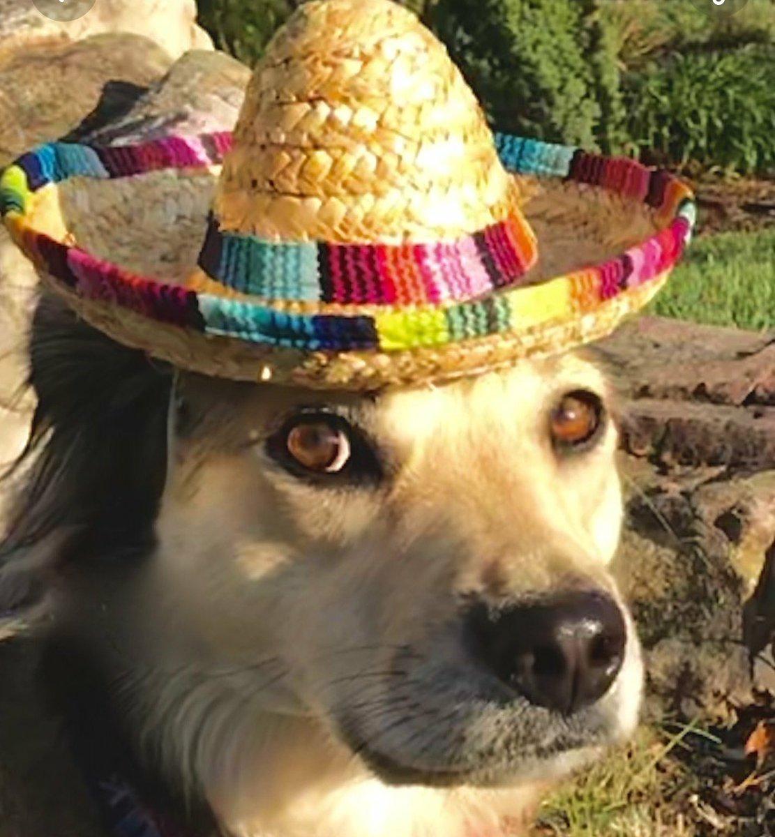 """Gary Lezak On Twitter: """"Happy Cinco De Mayo! Sunny The"""