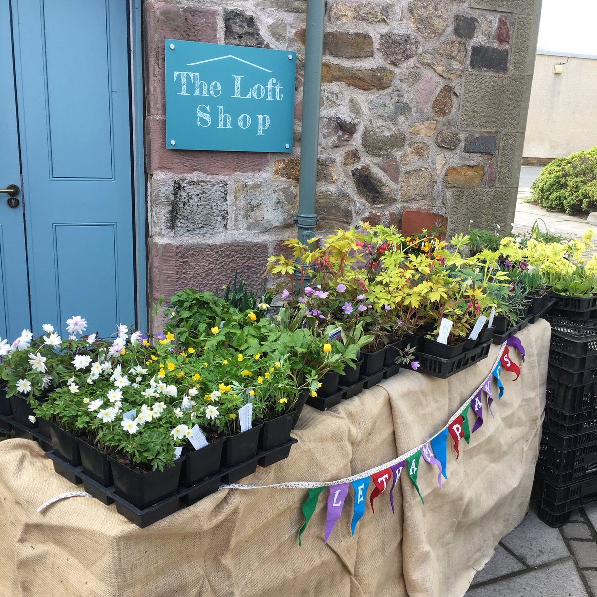 Loft caf bakery on twitter chelsea silver medal winner caroline loft caf bakery on twitter chelsea silver medal winner caroline from letham plants will have a stall in our courtyard again selling her perennials mightylinksfo