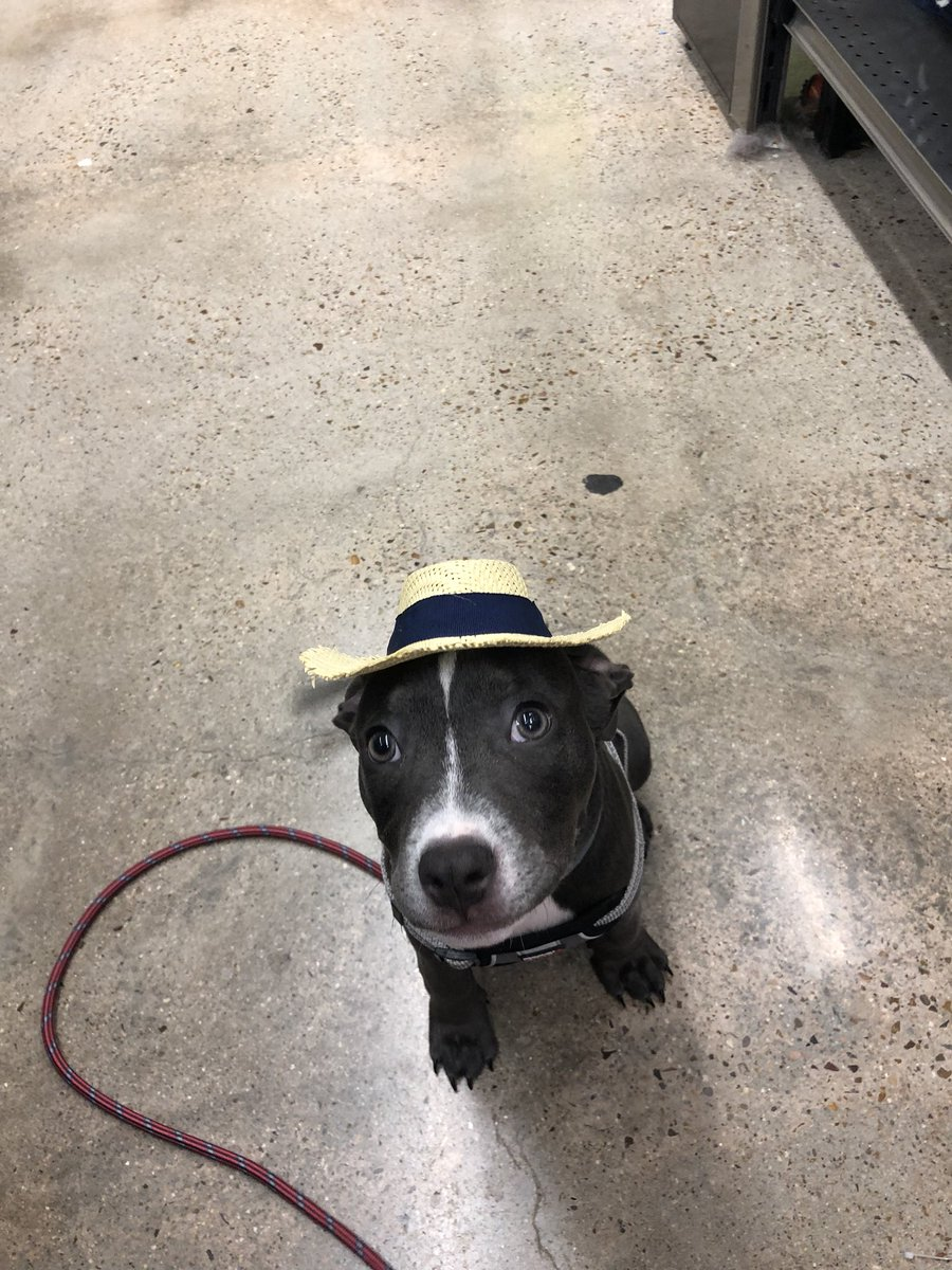 Blu was so ready for the party and she wasn't allowed bc she's a pitbull fuck petsmart https://t.co/XWkjyz8GNt