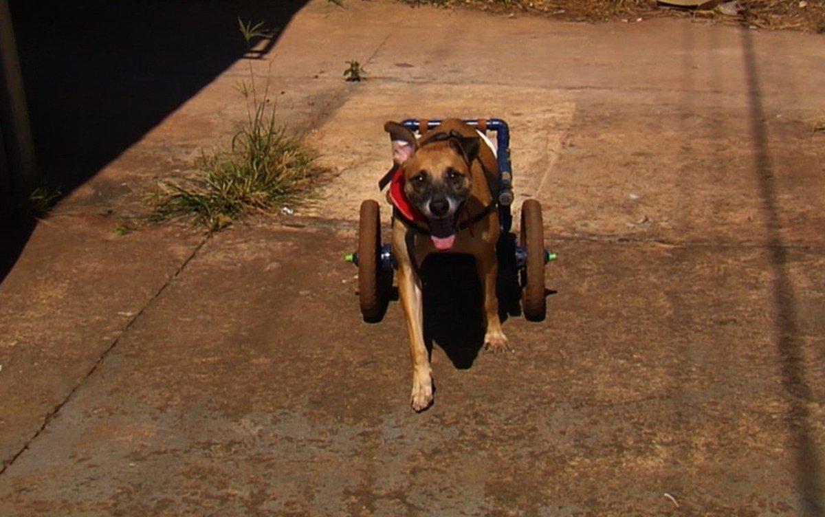 Servidor público constrói cadeiras de rodas de graça para cães que não conseguem andar, em Goiânia https://t.co/UU6Zs707KS #G1